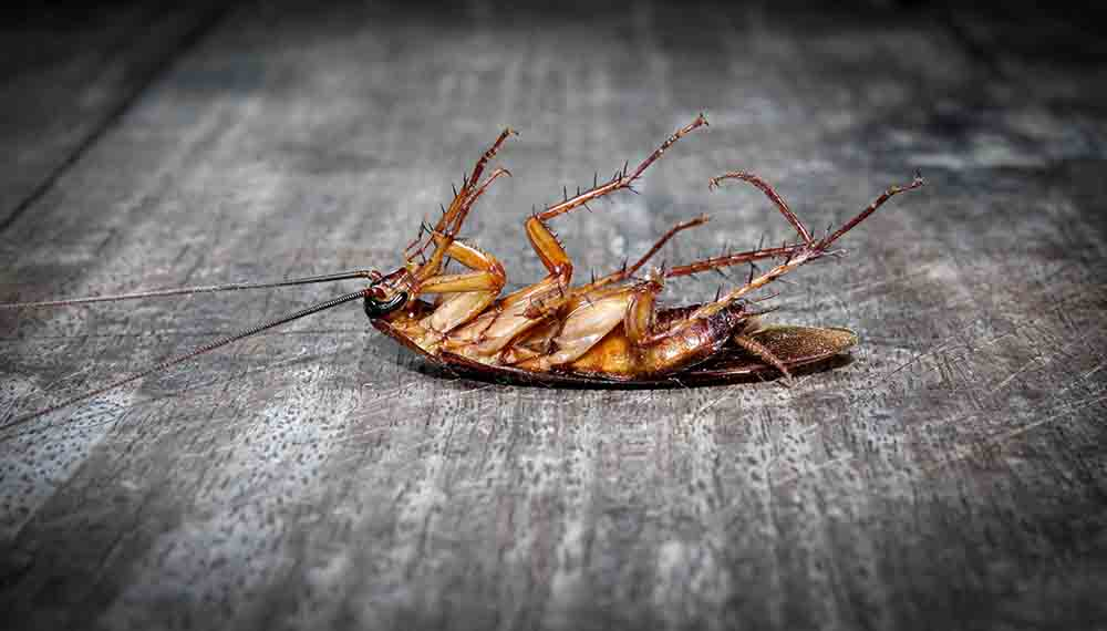 how to get rid of cockroaches in kitchen cabinets naturally forever | what kills cockroaches instantly home remedies |